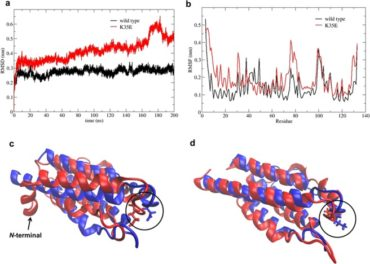 Семейство человеческих IL2-мутеинов с терапевтическим потенциалом против рака